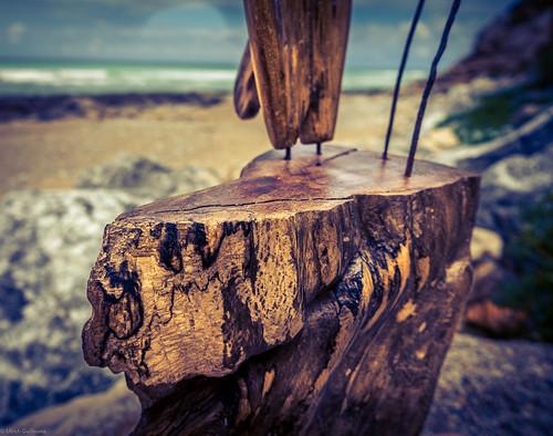 Driftwood of Bidart