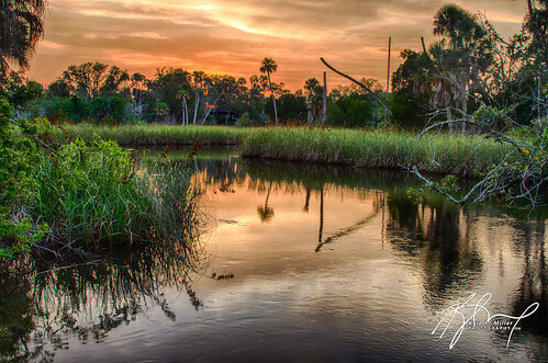 trees sunset color nature water landscape florida palm palmtree marsh hdr crystalriver