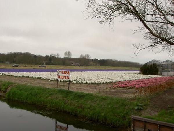 Scheveningen         22-04-2006       30 Km(10)