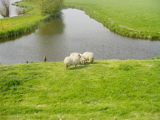 Hoorn          07-05-2006 30Km  (38)