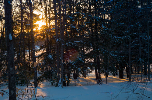 trees winter sunset sky sun snow cold forest landscape woods