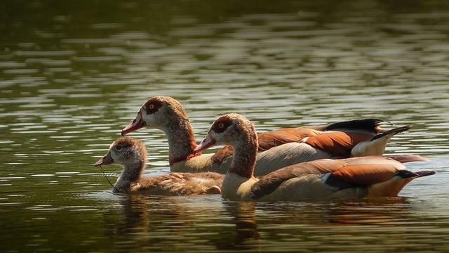 En famille-Lac de Bambois