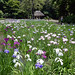 Japan Parks & Gardens