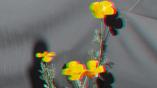 California Poppy in 3D | by Señor Danimal