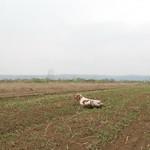 IAGO DI VALTRESINARO - Reperito alla grande coppia di starne nei terreni prospicienti il Morava.