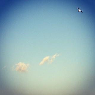 飛翔在你的天空之上...