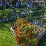 Raised bed garden at Avalon