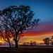Foggy Sunrise [Explored] by Jacqui Barker Photography