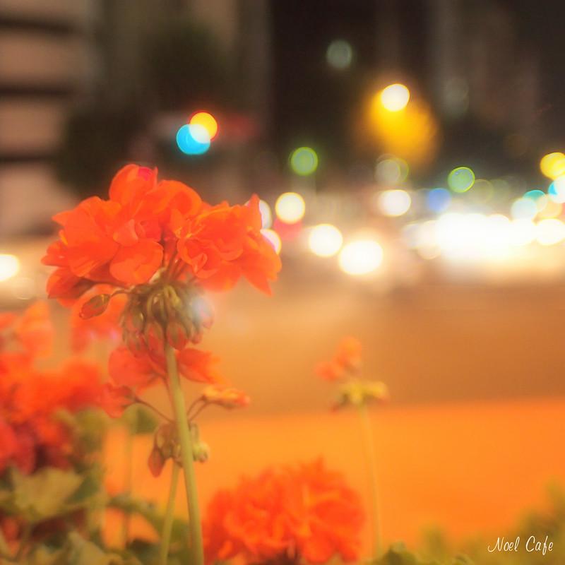 二丁目の夜 by Noël Café