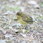 Bird on the ground