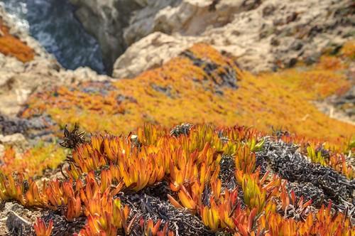 california orange gold coast raw cliffs fav30 hdr 3xp photomatix nex6 sel55210