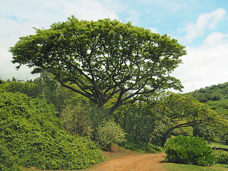 McBryde - Allerton Gardens -Joe 22 | by KathyCat102