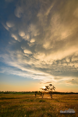 storm stormy thunderstorm june summer sky weather clouds nikond750 tokina1628mmf28 blue norfolk nebraska greatplains evening dusk sunset colorful gold golden yellow dying lpsupercell green grass three trees sun mammatus