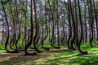 The Crooked Forest, Gryfino | by holywalle project...
