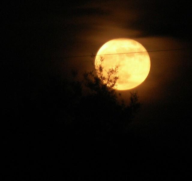 Orange Moon 4