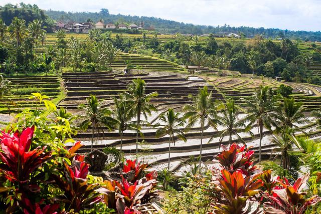 Belles rizières de Jatiluwih ricefields unesco world heritage