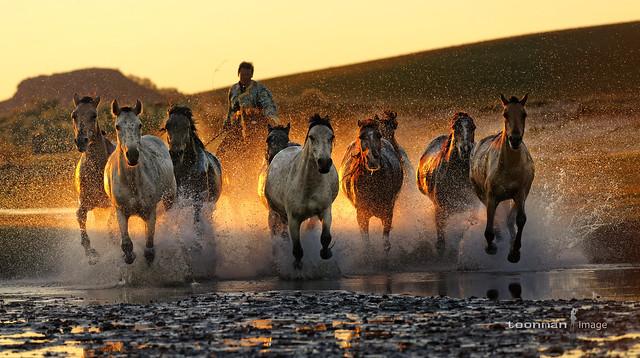 Galloping Horses, Inner Mongolia