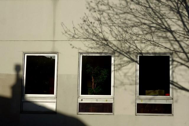 Shadow 344 - three windows