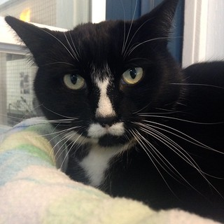Kasey - 9 year old neutered male | by carescatshelter