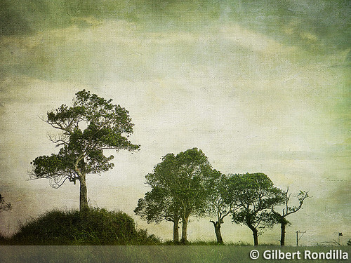 camera trees painterly tree texture digital landscape nikon philippines getty digicam tagaytay hilltop gettyimages colorimage tagaytaycity l110 gilbertrondilla gilbertrondillaphotography gettyimagescollection