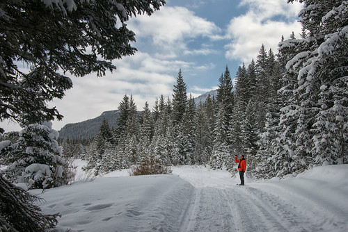 trees winter snow mountains mike nature landscape snowshoe nikon montana husband hike trail snowcovered 2014 cookecity bannocktrail dailynaturetnc13 dailynaturetnc14