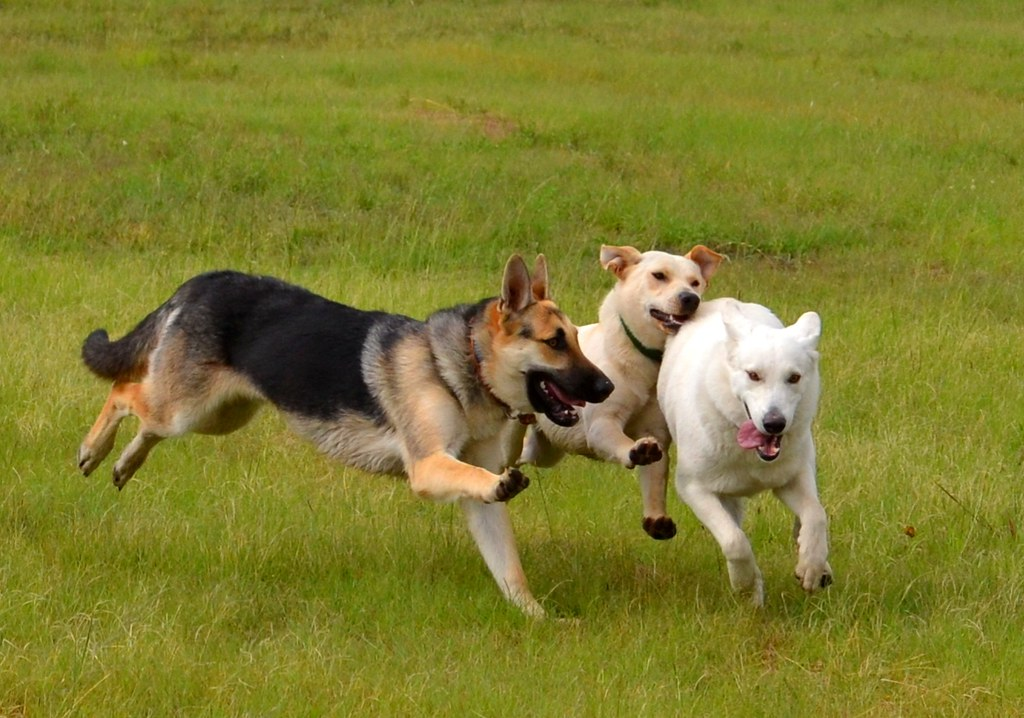 Dogs at play | Jan Truter | Flickr