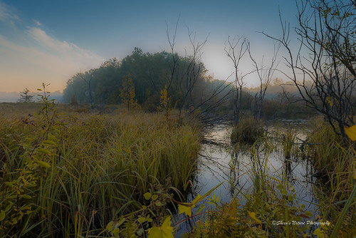 Quiet Morning | by Sheen's Nature Photography