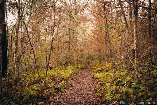 statepark autumn trees winter fall nature forest landscape woods florida outdoor hiking fallcolors trail v1 fortwhite nikon1 mirrorless vsco vscofilm