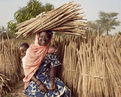 Portrait of Abou amid millet stalks dried in the sun   by World Bank Photo Collection