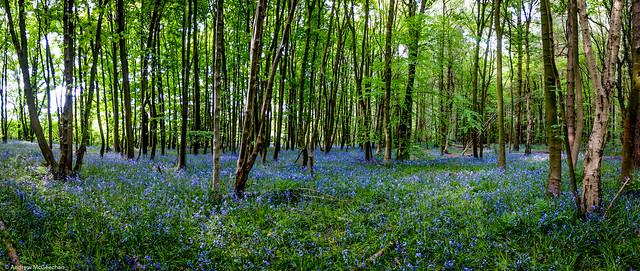 Elkin Wood Allesley Coventry (Woodland Trust)