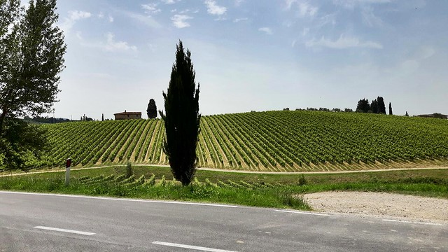 Vigneto di San Polo in Chianti - Chianti vineyard