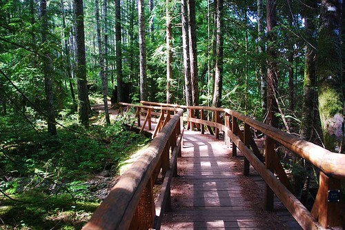 Nymph Falls Trail, Courtenay, Vancouver Island, British Columbia, Canada.