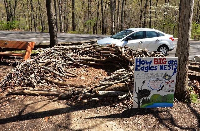 Size of a Bald Eagle's nest.