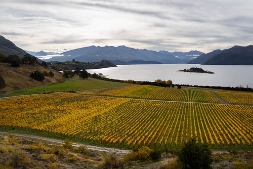 autumn trees newzealand sky lake mountains clouds view scene autumncolours southisland centralotago southernalps tussock wanaka lakewanaka ripponvineyard tripdownsouth rubyisland garpevines