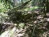 Une carbunara le long de la branche du Velacu
