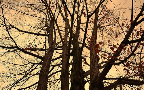 pink autumn sky orange brown tree fall chattanooga colors leaves evening twilight flickr tennessee bare salmon bluffviewartdistrict