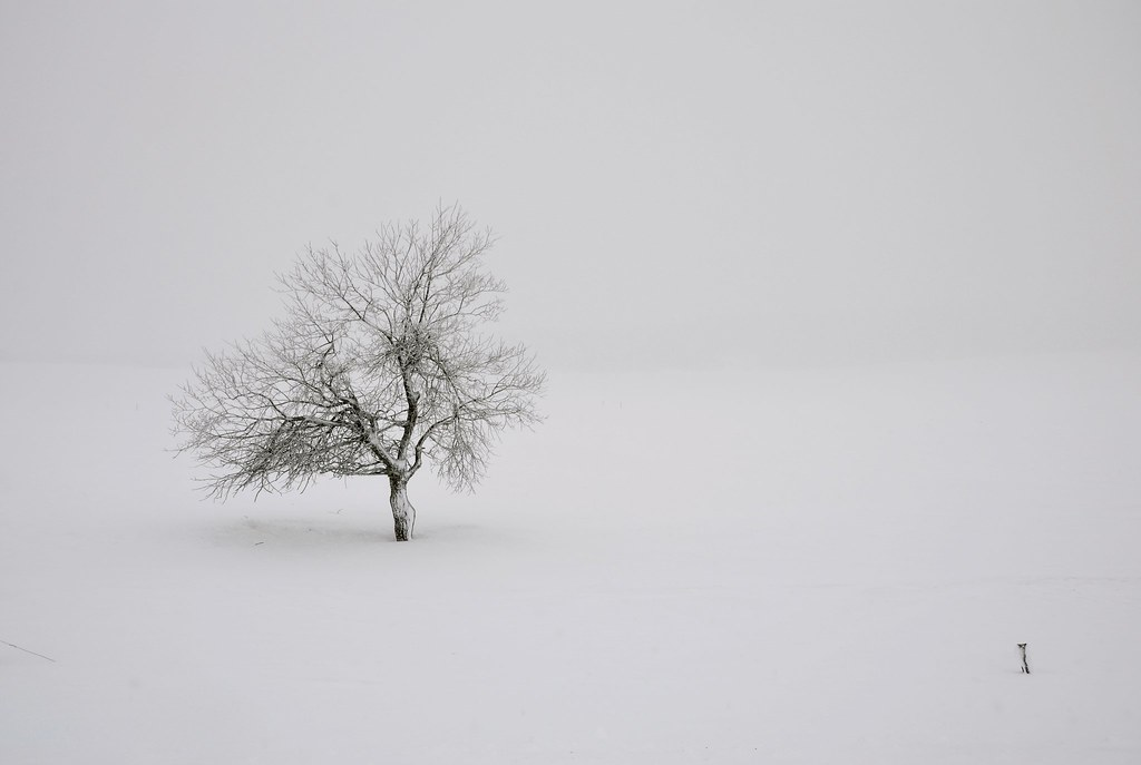 Winter's mystery - Lonely tree