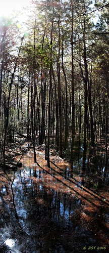 trees lake nature reflections texas shadows swamp thewoodlands shadowlake shadowbendpark dappledlights zeesstof lakemargin