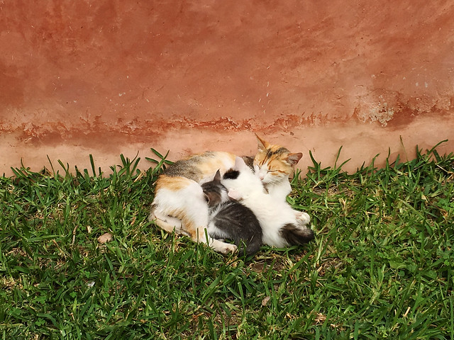 Cats at the Saadian tombs