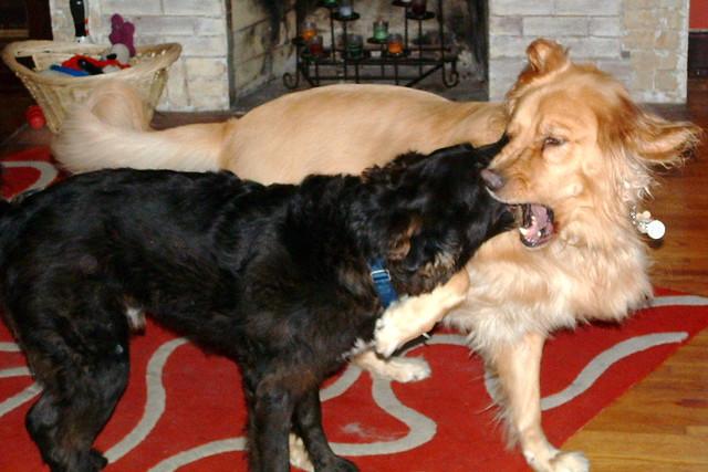 His best dog buddy, Kilmer