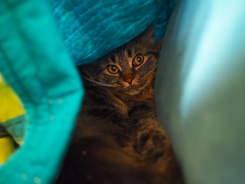 Molly made herself a blanket fort | by juli anna