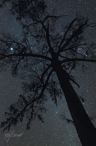 longexposure night dark stars unitedstates florida orion betelgeuse cypress nightsky jupiter newmoon greenville milkyway orionnebula wacissa wacissariver thephotographyblog