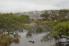High Mountain Pond