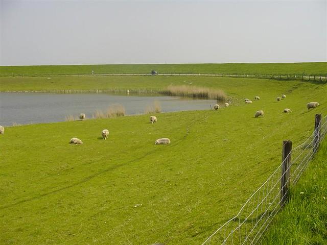 Hoorn          07-05-2006 30Km  (32)