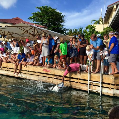 Saba Rock Resort - Hand Feeding Tarpon BVI