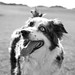 a lesson in happiness from Sage the Dog by Beth D. Yeaw Photography