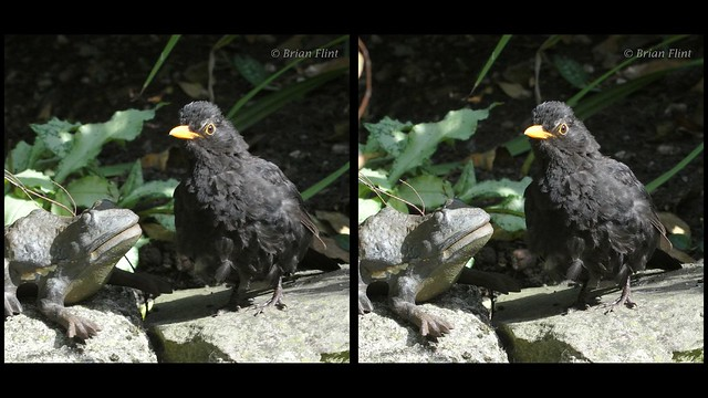 Blackbird and Toad - 3d crossview