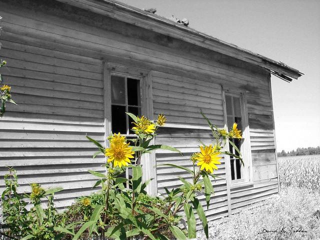 abandoned flora