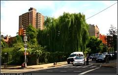9th street community garden