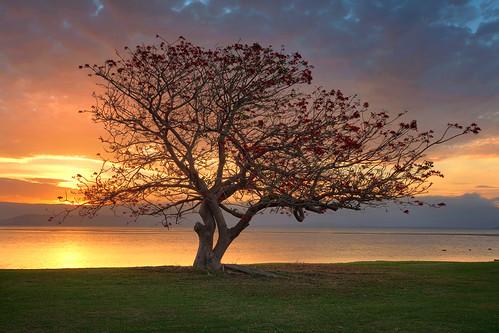 new lake tree wales photoshop exposure south australia nsw manual hdr blending illawarra
